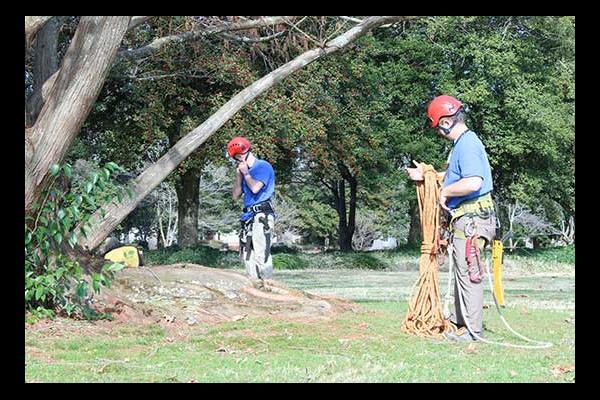 Tree Arborists Working In Virginia