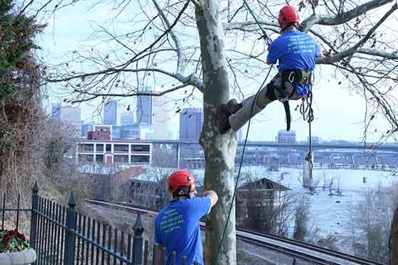 Tree Pruning Richmond VA