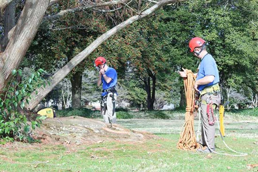 Tree arborists working in Virginia